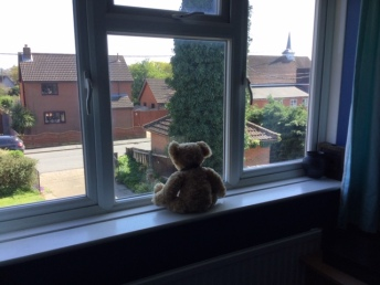 Teddy in Morag's window April 17th 2020