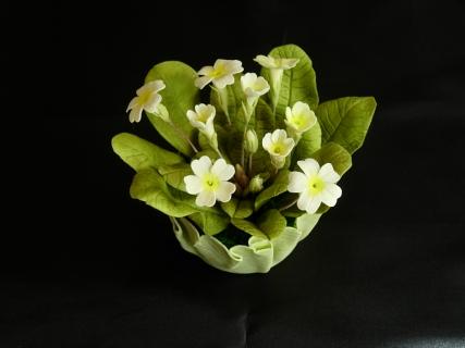 Yvonne's primroses