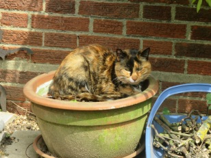 Becca's cat